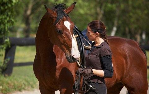 SHMAA-Horse